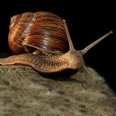 Illnesses of Snail