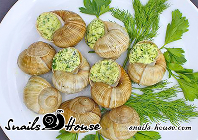 """Helix Pomatia in """"Limousin"""""""