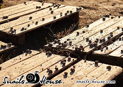 Snail house (pallet)