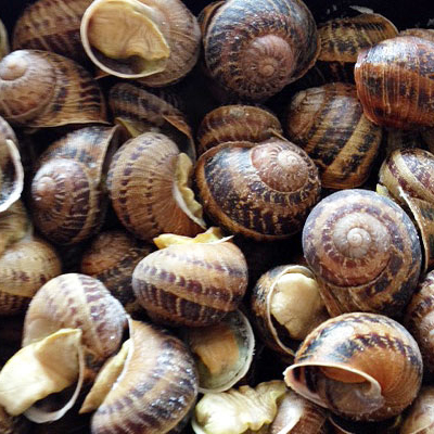 Who has invented delicacies from snails?