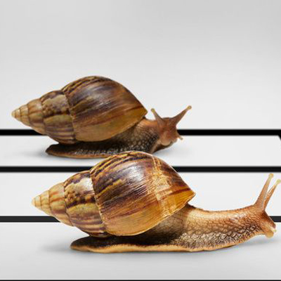 Why snails move slowly?