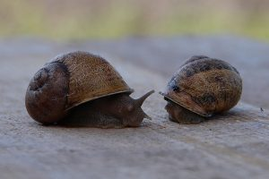Snails farm- is a new form of profit earning in 2020