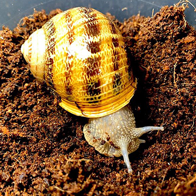 Top 5 Reasons to breed Snails