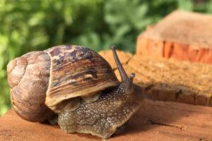 How works a snails farm