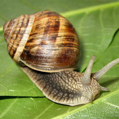 HOW TO PROMOTE YOUR SNAIL BUSINESS?