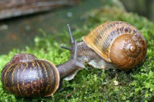 Interesting facts about snails