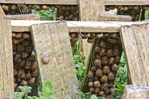 STORAGE RULES OF THE SNAILS BEFORE EXPORT