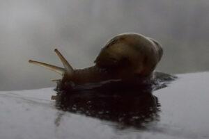 Mollusk after hibernation