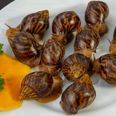 Why do we need snails?
