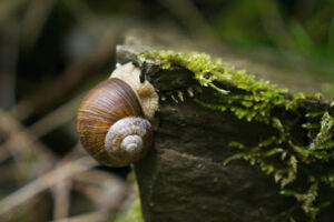 BREEDING SNAILS: WHAT PURPOSE ARE THEY USED FOR?