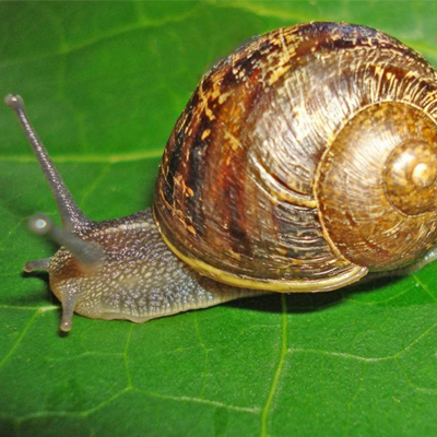 BASIC STANDARDS FOR KEEPING AND GROWING SNAILS