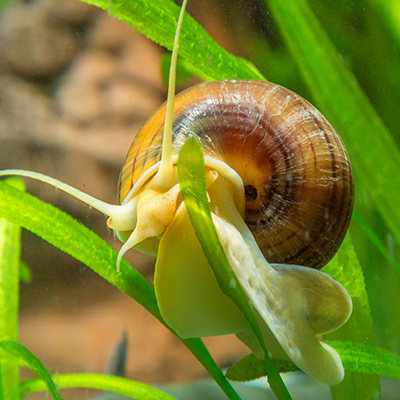 CONDITIONS FOR BREEDING HEALTHY SNAILS