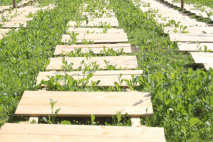 SNAIL FARM IN UKRAINE - QUICK PROFIT