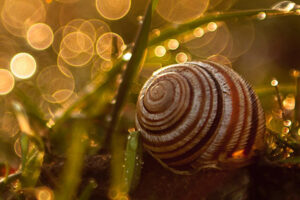 Benefits of snail mucus extract