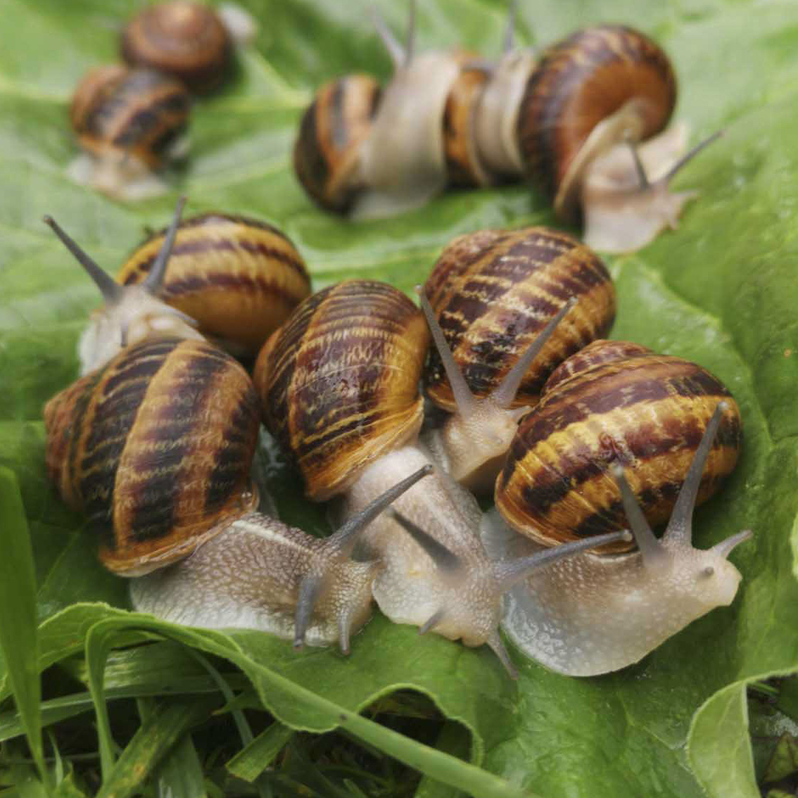 SNAIL FARM IN UKRAINE - QUICK PROFIT