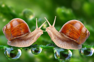 WHAT SNAILS TO CHOOSE FOR BREEDING?