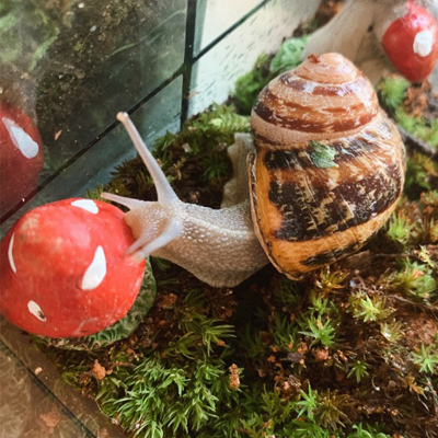 SNAIL AS A PET. WHAT SNAIL TO CHOOSE TO KEEP IN THE TERRARIUM?