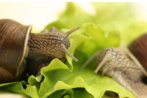 HOW TO ENSURE THE RIGHT DIET FOR SNAILS IN WINTER?