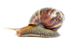 HOW TO PREPARE A SNAIL FOR EXPORT?