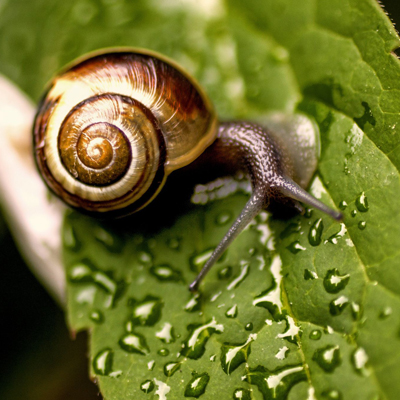 HOW THE EXTRACT OF SNAIL IS PRODUCED