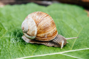 HOW TO KEEP SNAILS IN THE HOME CONDITIONS?