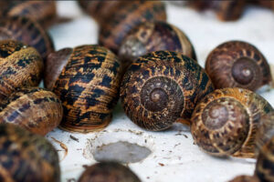 THE PROCESS OF ORDERING AND DELIVERY OF SNAILS TO THE END CUSTOMER