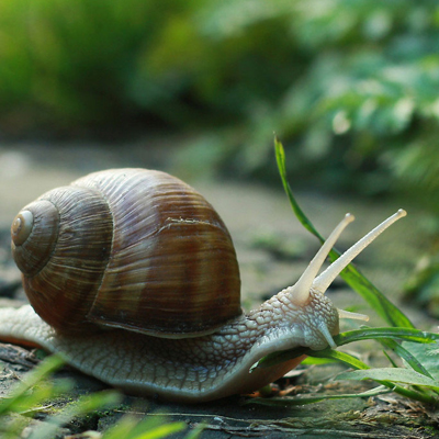 HOW TO PREPARE SNAILS BEFORE TRANSPORTING