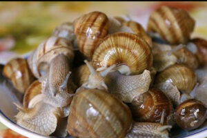 PROCESSING AND COOKING OF GRAPE SNAILS IN HOME CONDITIONS