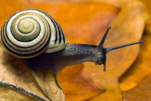 CAN A SNAIL SURVIVE WITHOUT ITS SHELL?