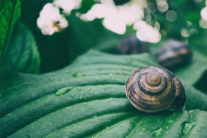 HOW MUCH ARE SNAILS SLEEPING? STANDARDS AND DANGEROUS DEVIATIONS