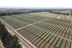 HOW TO EQUIPMENT A SNAIL FARM?