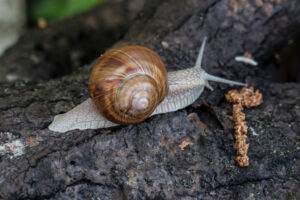 HOW TO CARE FOR A GRAPE SNAIL?